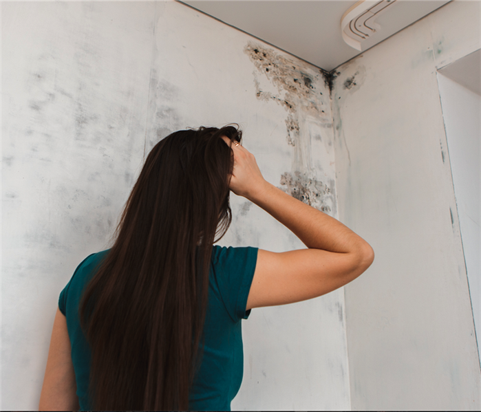 Commercial Mold Remediation: Your Responsibilities as a Landlord